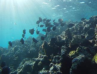 underwaterfish_325